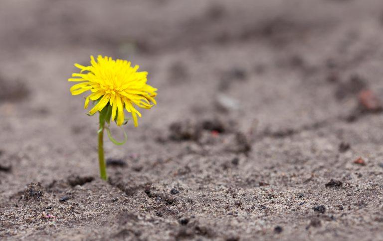 invertir diseno empresa sostenible